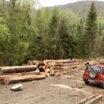 Sklad s drevom