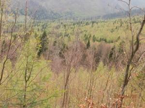 Pohľad na naše lesy